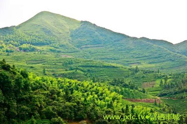 罗山位于江西丰城市洛市镇东南面21公里处,总面积约88平方公里,是